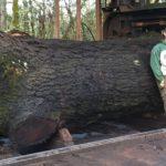 Jewell Hardwoods Lumberyard 19