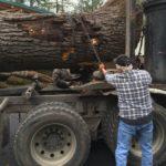 Jewell Hardwoods Lumberyard 8