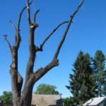 Urban tree recovery in Oregon by Jewell Hardwoods