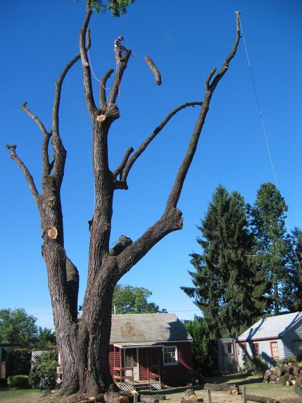 walnut recovery